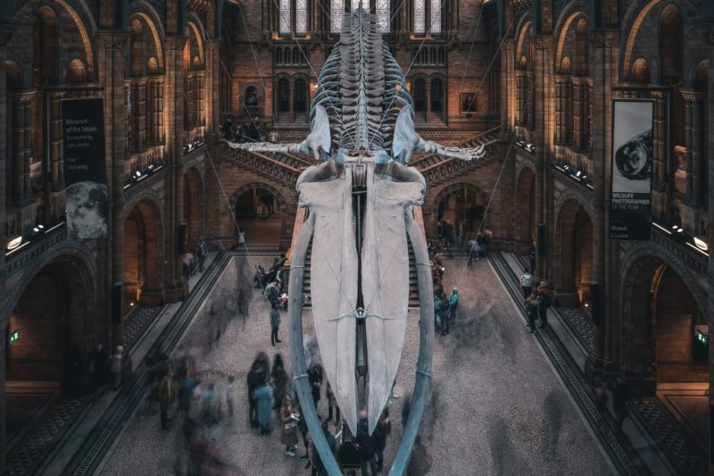 ロンドンのおすすめ観光スポット ロンドン自然史博物館