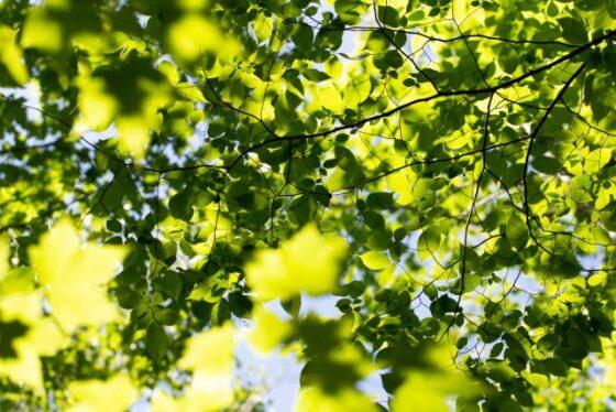Leaf(リーフ)│葉