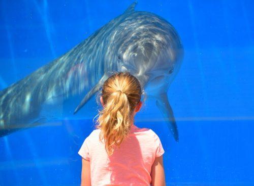 水族館でイルカを見る女の子