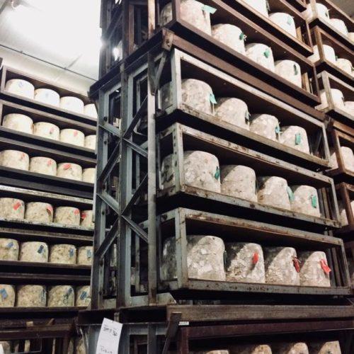 チェダーチーズの工場