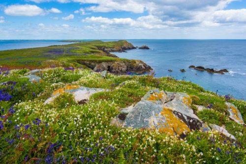 アイルランド セントパトリックスデー グリーン 緑